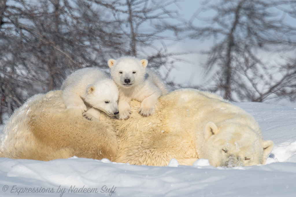 2017_Wapusk National Park_1406