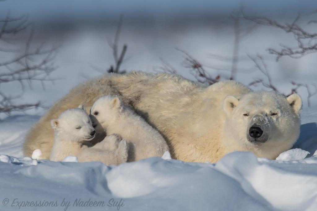 2017_Wapusk National Park_2985