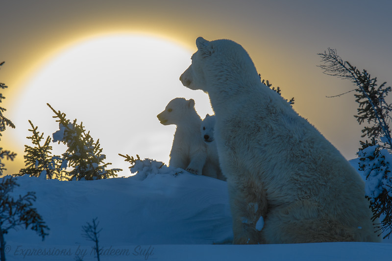 2017_Wapusk National Park_13862