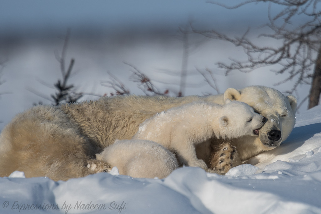 2017_Wapusk National Park_3275