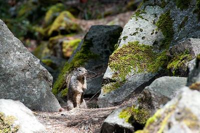 Pretty Please! Hike to Nevada Falls, Yosemite NP