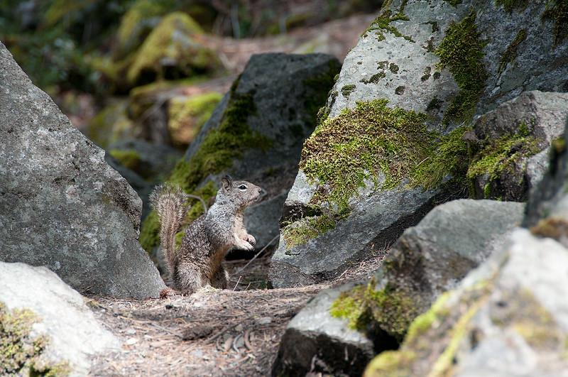 Hike to Nevada Falls, Yosemite NP