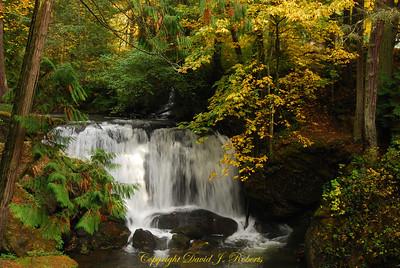 Whatcom Falls, Whatcom Falls Park, Bellingham WA