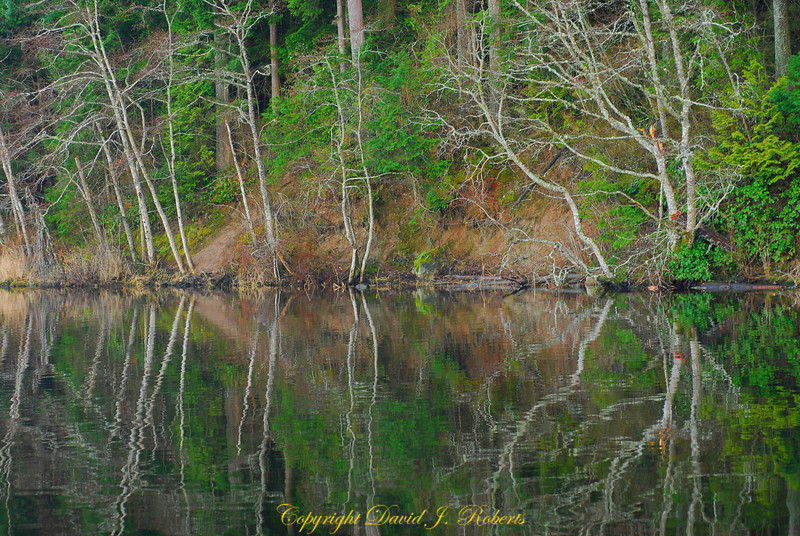 Reflection on Lake Padden, Bellingham, WA