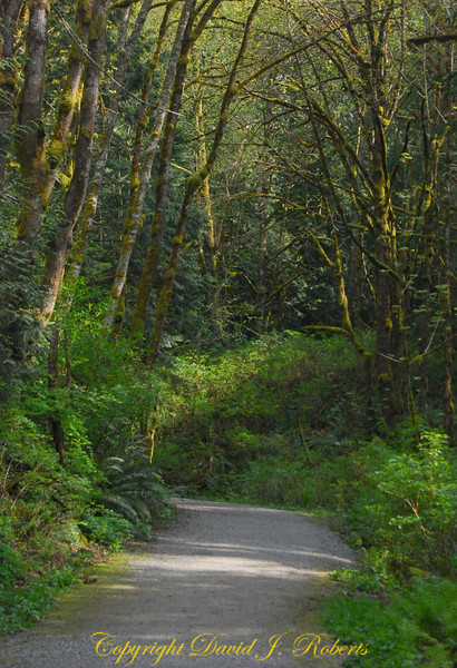 Padden Gorge trail, Bellingham, WA