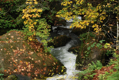 Whatcom Creek, Whatcom Falls Park, Bellingham WA