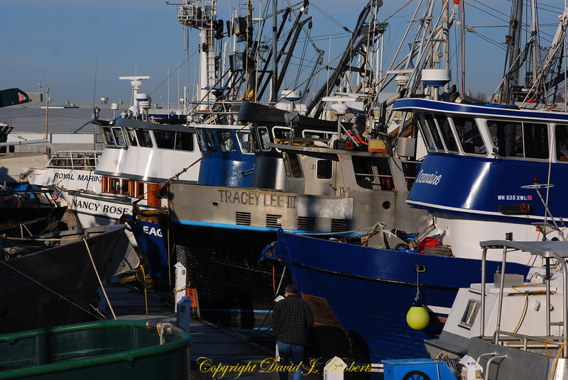 Fishing fleet, Squalicum Harbor, Bellingham, WA