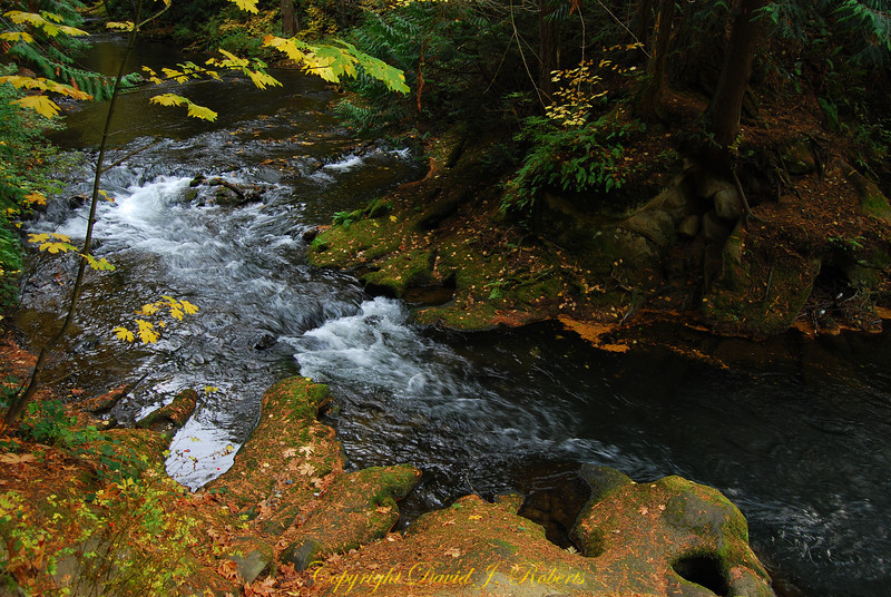Whatcom Falls Park and Whatcom Creek, Bellingham, WA