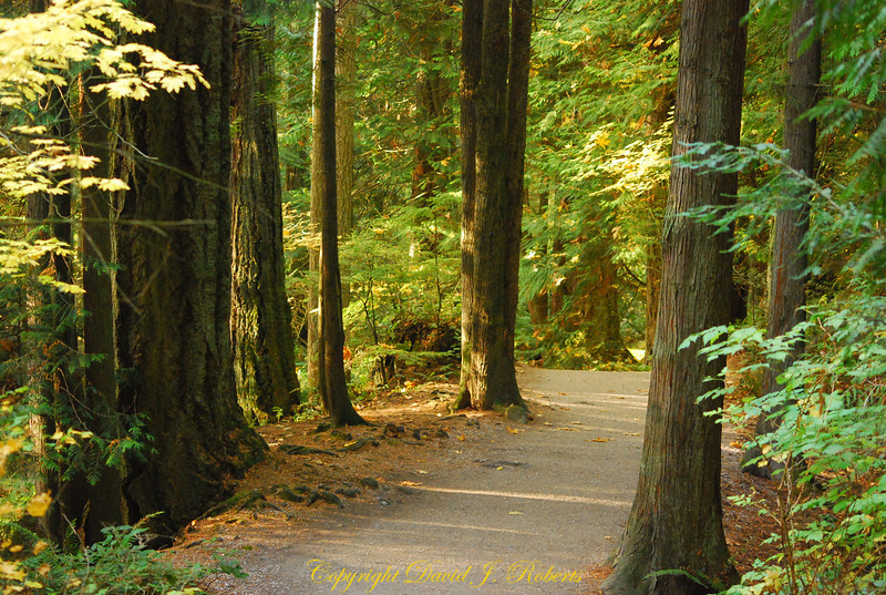 Trail in Whatcom Falls Park, Bellingham WA