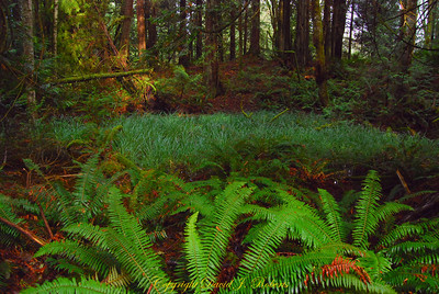 Small wetland in Stimson Forest near Bellingham, WA  November, 2012.  Enhanced image with HDR.
