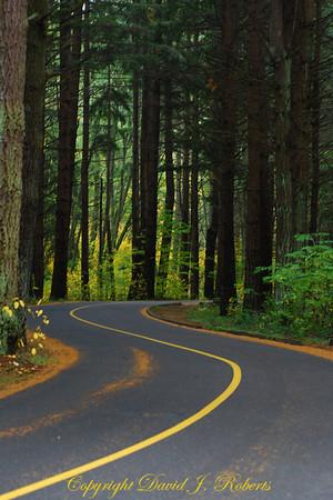 Twisting road in Lake Padden Park, Bellingham WA