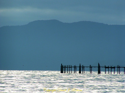 The cement dock pilings in Bellingham Bay with Lummi Island in the distance.