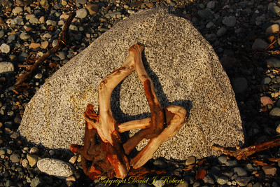 Stone and roots, Point Whitehorn County Park, Whatcom County Washington