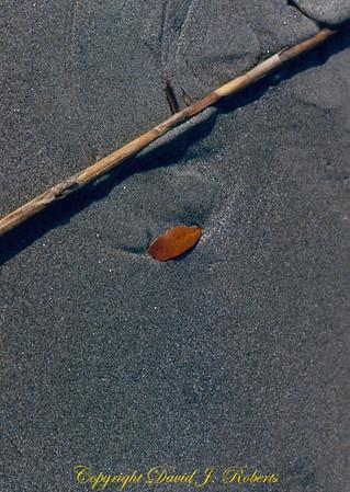 Sand scene, Charleston, South Carolina