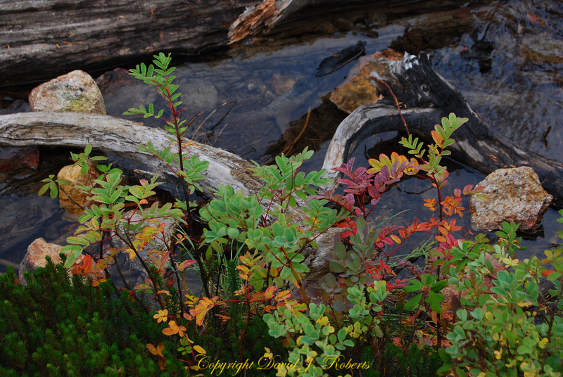Colors of call along the shoreline of Cutthroat Lake