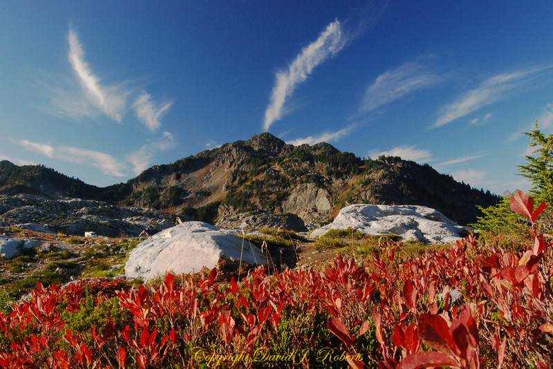 Huckleberry bushes and Table Mountain, Artist Point,  Whatcom County, Washington