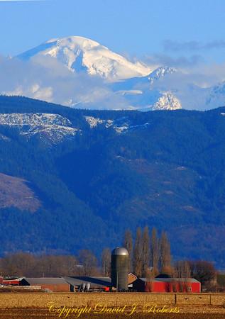 Mount Baker hovers above Whatcom County farm, Washington