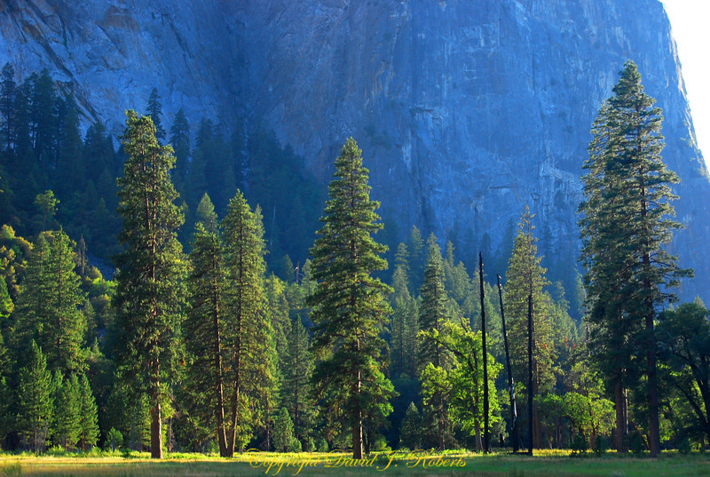 Evening light in the valley bottom, Yosemite National Park, California