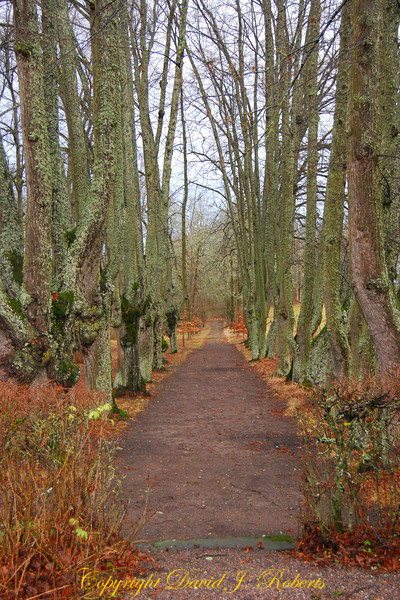 Taxnas walkway, Sweden