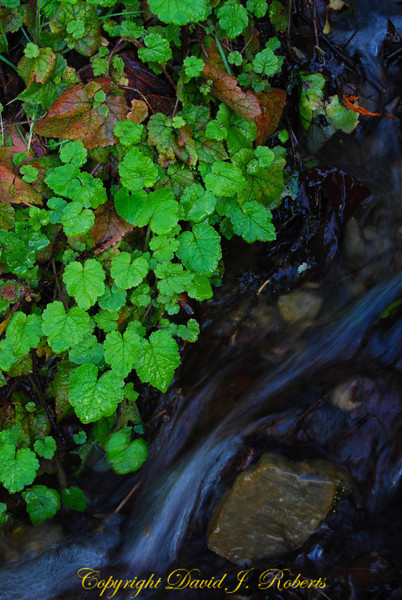 There are many small streams flowing off of the south facing flank of Stewart Mountain. This one seemed special to me, perhaps due to the lush vegetation growing along the edge. I love trying to capture the motion of water, especially in small streams like this.
