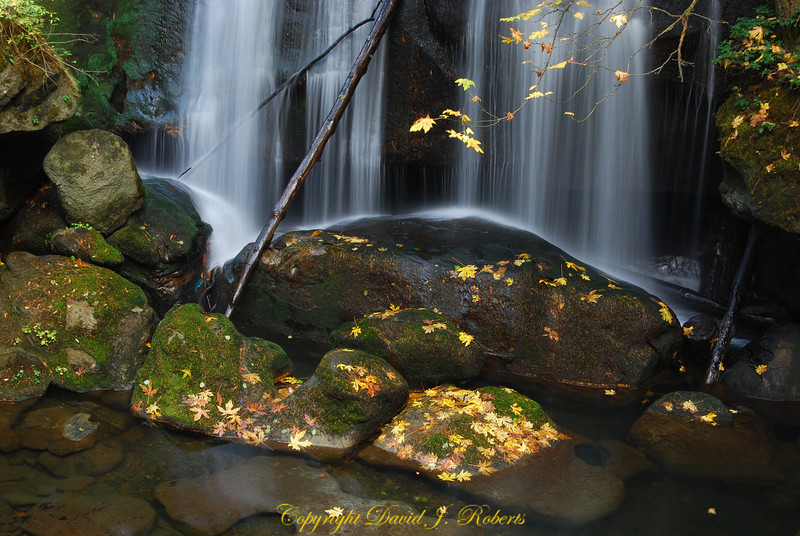 Whatcom Falls Park and Whatcom Creek, Bellingham, WA