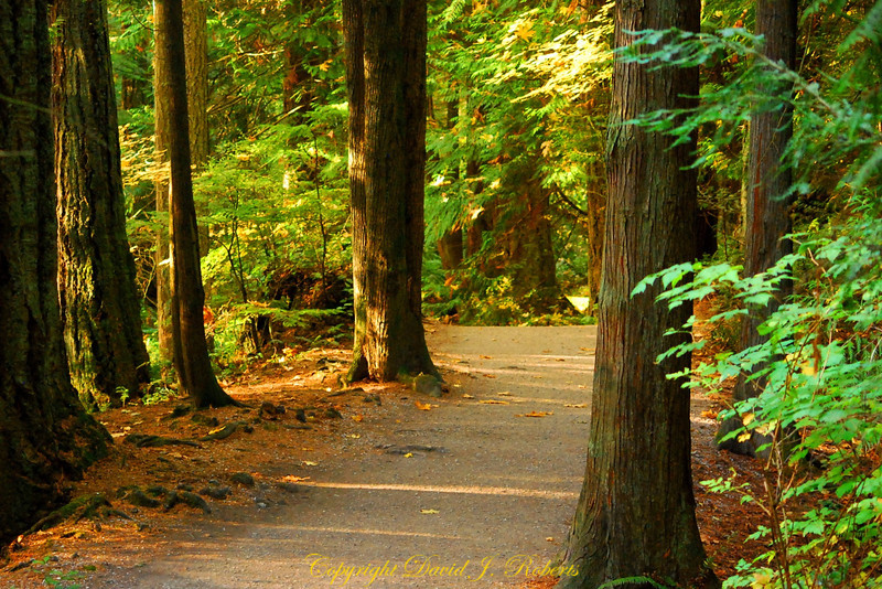 Trail in Whatcom Falls Park, Bellingham Washington