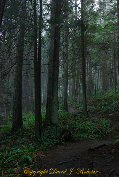 Hemlock Trail in the fog near Bellingham, WA