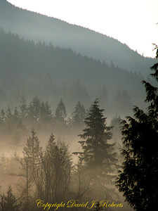 Foggy morning view of Lookout Mountain, Whatcom County Washington