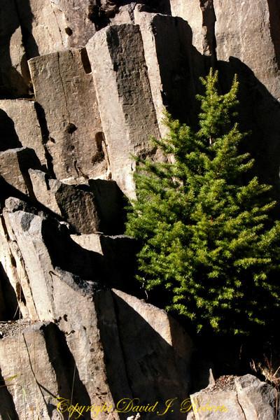Columnar Andesite, Mount Baker, Whatcom County, Washington