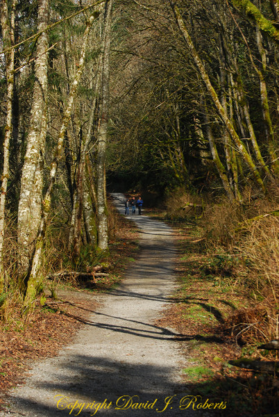Here are folks walking the North Lake Whatcom trail, a former rail line at the base of Stewart mountain that runs for about 3 miles along the lake shore. Easy walk (or run) with grand views.