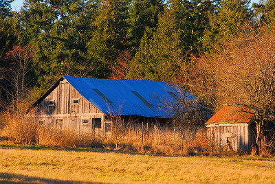 Farm scene, Whatcom County, Washington