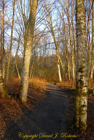 Trail in Point Whitehorn County Park, Whatcom County Washington