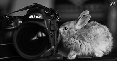 Nikon D4 first kiss