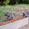 13 08-11 Hart Park cats 8245