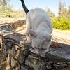 13 08-11 Hart Park cats 8244