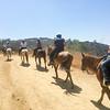 17 08-19 Sunset Ranch 7237