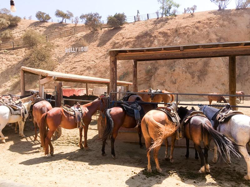 17 08-19 Sunset Ranch 8953