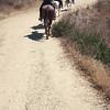17 08-19 Sunset Ranch 8961
