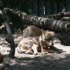 21 05-16 Chaffee Zoo 0496