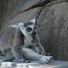 21 05-16 Chaffee Zoo 0522