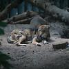 21 05-16 Chaffee Zoo 0511