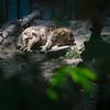 21 05-16 Chaffee Zoo 0510