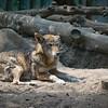 21 05-16 Chaffee Zoo 0514
