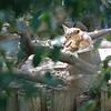 21 05-16 Chaffee Zoo 0505