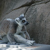 21 05-16 Chaffee Zoo 0521