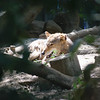 21 05-16 Chaffee Zoo 0507