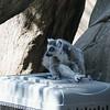 21 05-16 Chaffee Zoo 0518