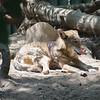 21 05-16 Chaffee Zoo 0500