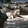 21 05-16 Chaffee Zoo 0503
