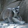 21 05-16 Chaffee Zoo 0520